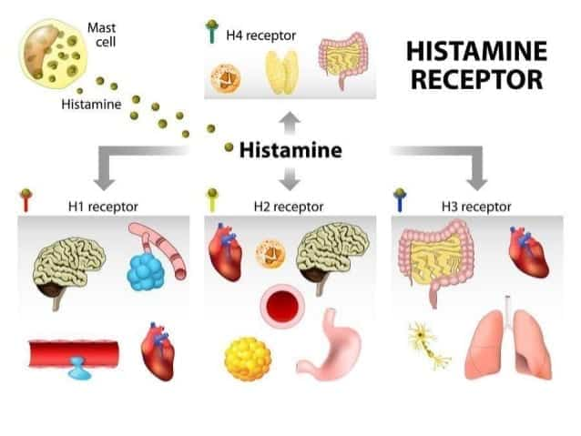 What is Histamine Intolerance and How Can Dietary Changes Help?